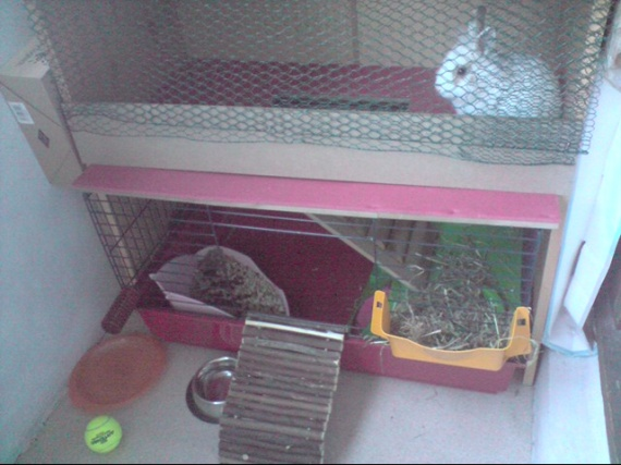 Clapier a lapin fait maison qui me suit hamsters for Clapier lapin fait maison