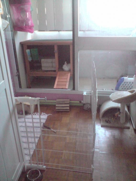 cage fait main fotos svp hamsters cochons d 39 inde lapins forum animaux. Black Bedroom Furniture Sets. Home Design Ideas