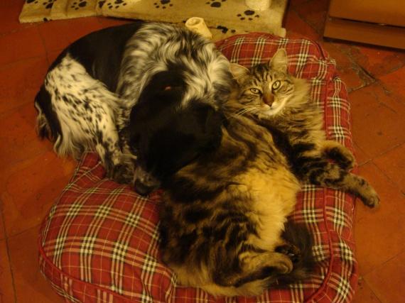 Sisco et Sid