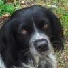 tilouve-sisco-2012-06-11-img