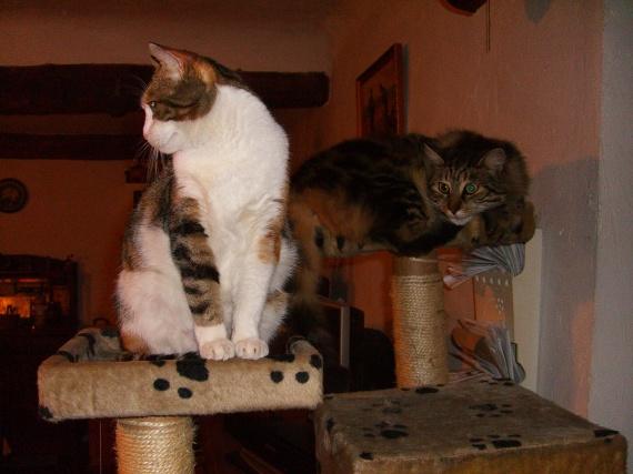 Filetta et Sidoux