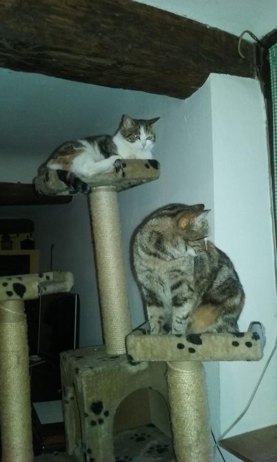 Filetta et Mela