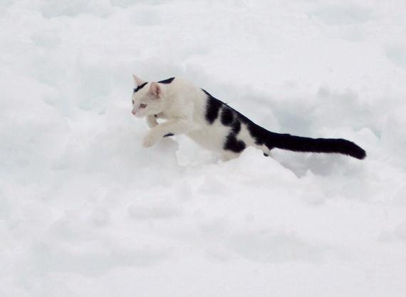 premiers pas dans la neige