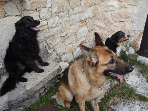 Gypse et ses amis