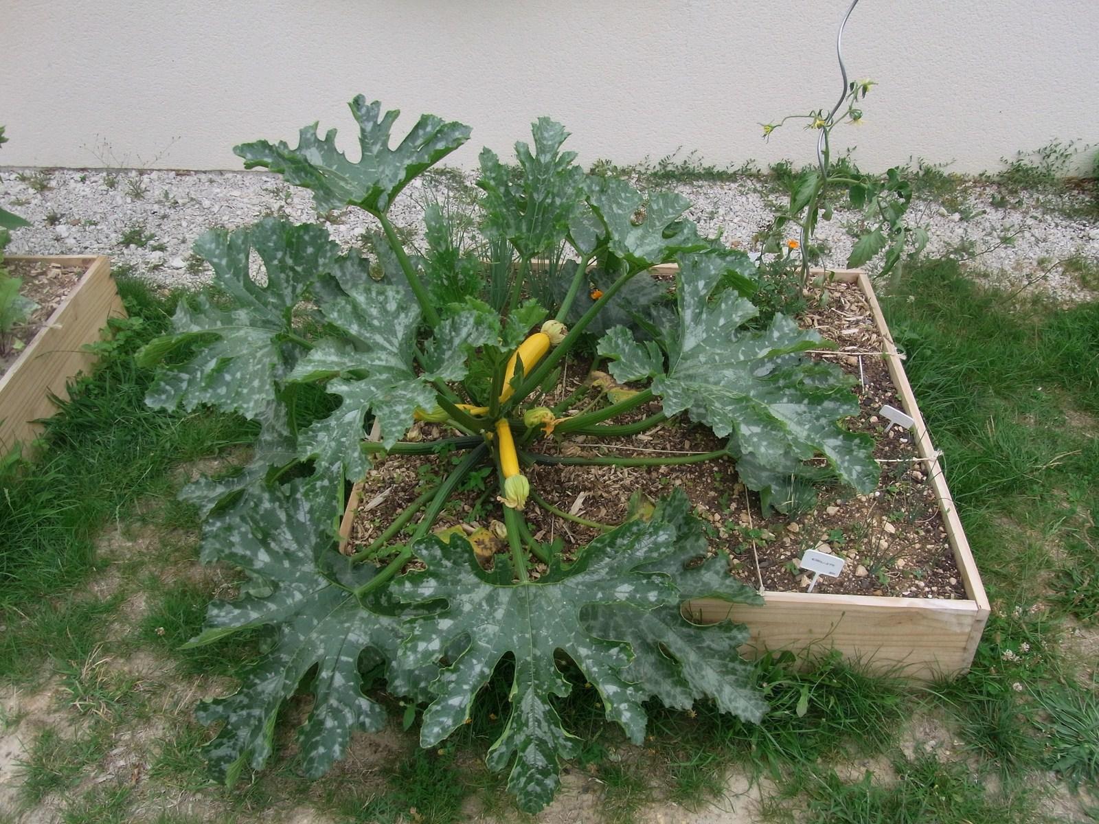 Carr 2 potager en carres audreyzoe33 for Cendre dans le jardin