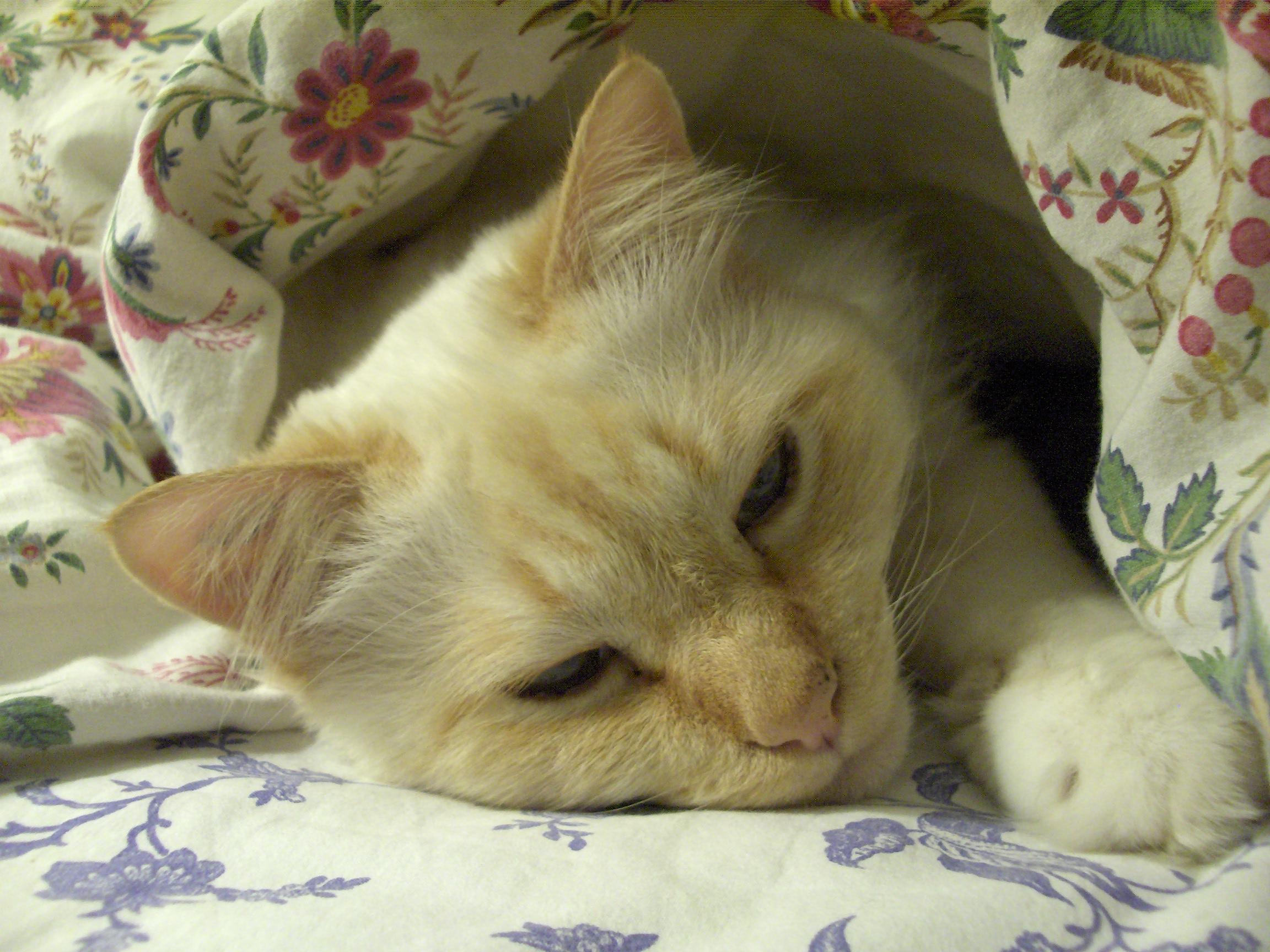 Mon Chat Dort Sur Mes Pieds mon chat dort avec moi mais sous le duvet. - chats - forum