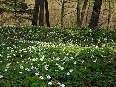tapis printemps