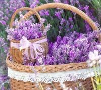 flowers_lavender_baskets_purple_flowers_ribbon-86328-jpg!d