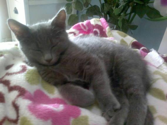 Duchesse (4 mois)
