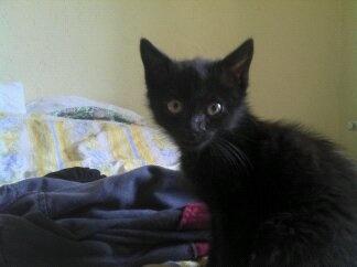 re petit chat