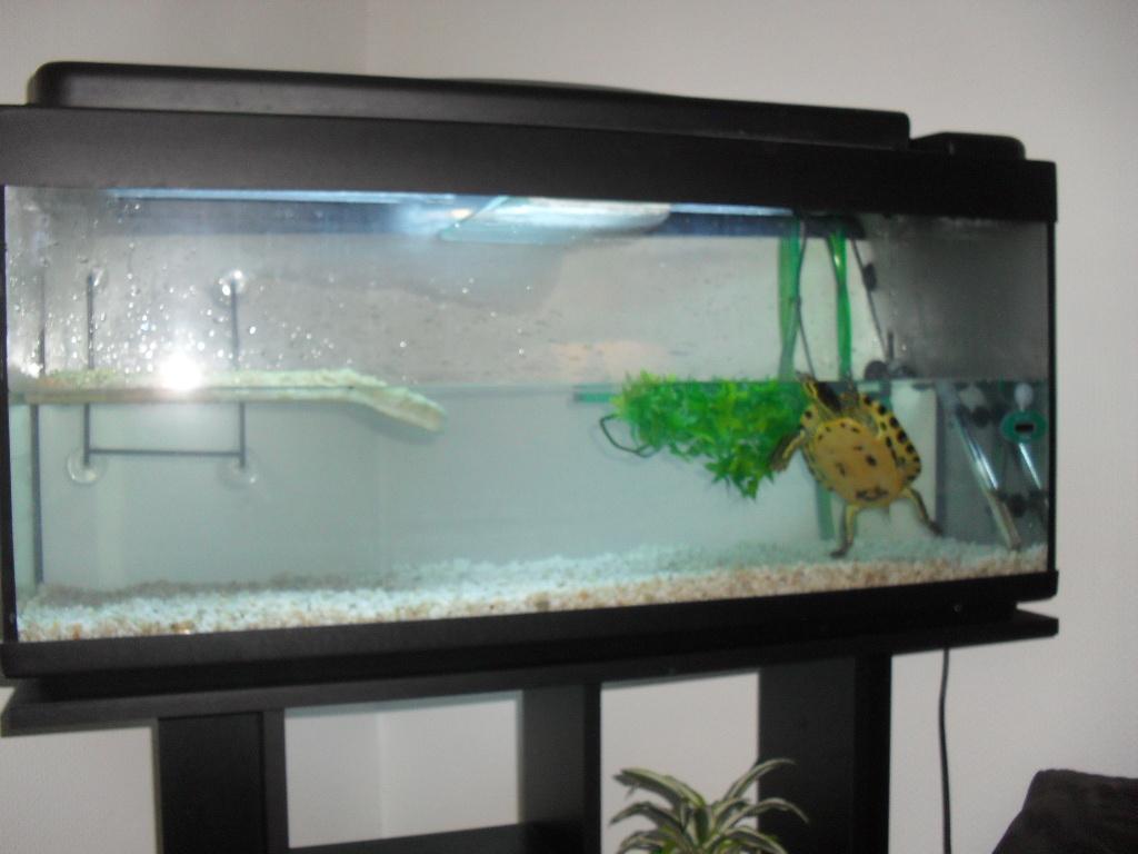 Uvb Pour Ma Tortue A Quelle Distance Aquariums Et Vivariums