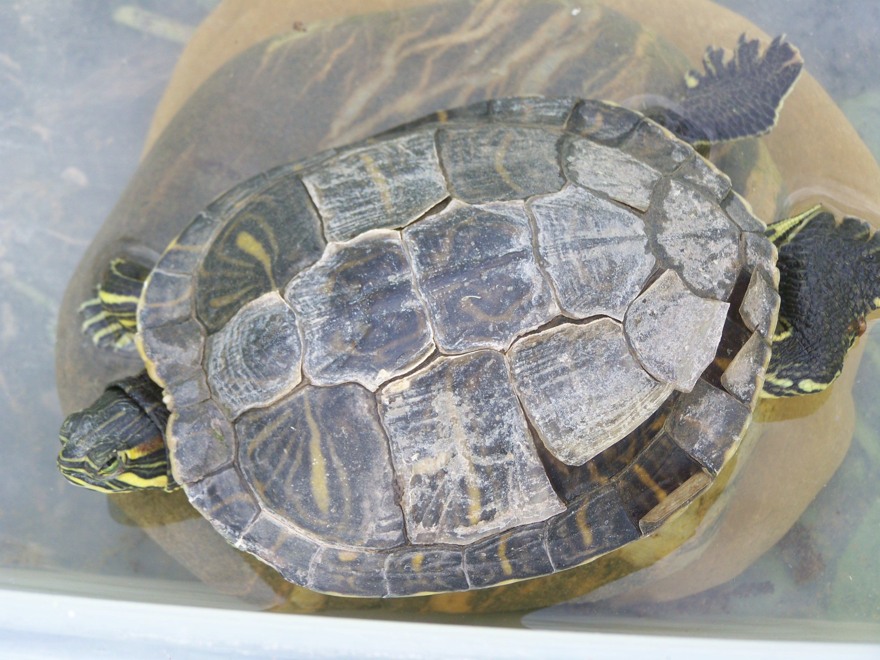 big-83820320e1 Frais De Aquarium A tortue Concept