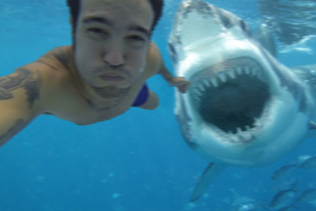 shark-selfie-460x307