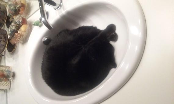 lavabo dodo