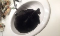 lavabo dodo noir sur noir ahah
