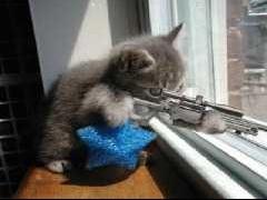 dogs_sniper-t1