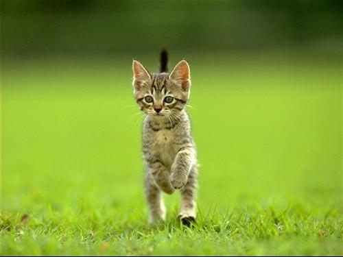 chaton-joueur