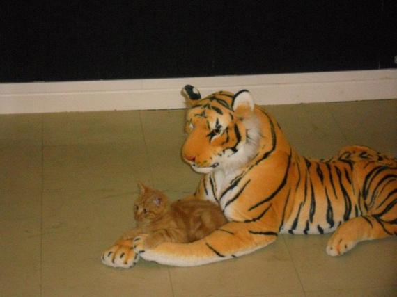 tigrou tigre