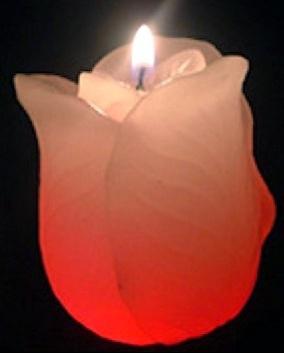 bougie-tulipe