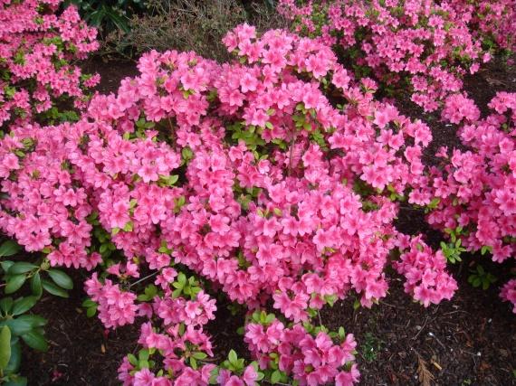 jardin disney