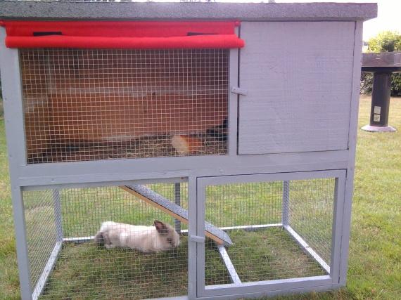 Clapier pour lapin b lier hamsters cochons d 39 inde for Fabriquer un clapier a lapin