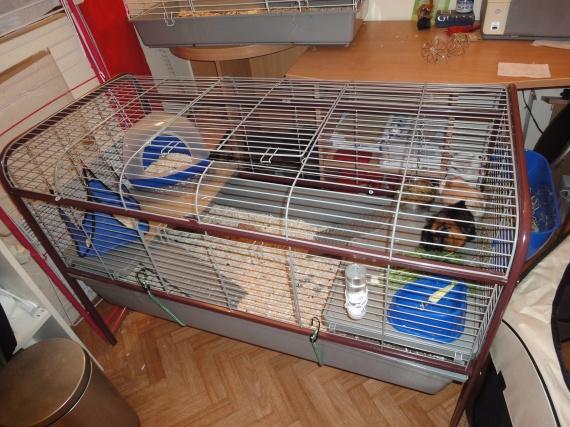 La nouvelles cage des chons