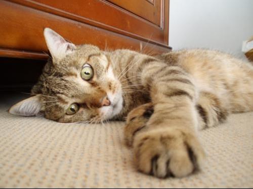 elle nous montre sa chatte se faire lecher