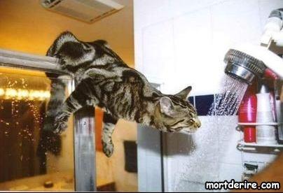 le-chat-dans-la-douche