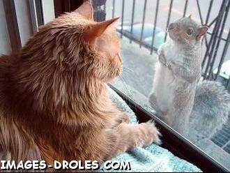 chat-ecureuil