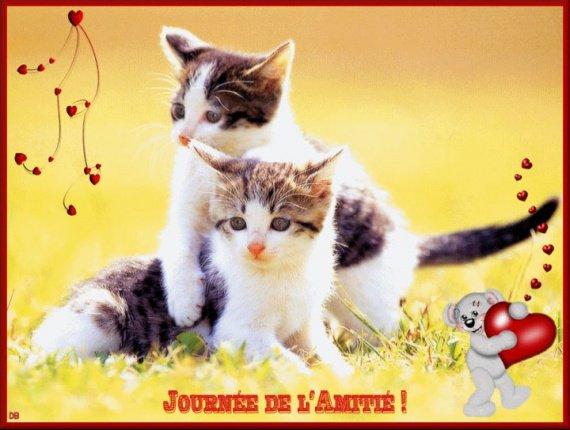 petit chat journée de l'amitié