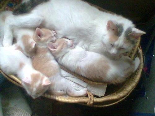 Bianca et chatons