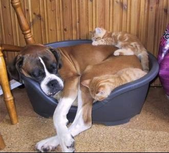 chien_dormir_chat