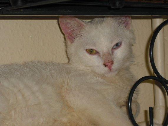 Casper radiateur gold and blue eye