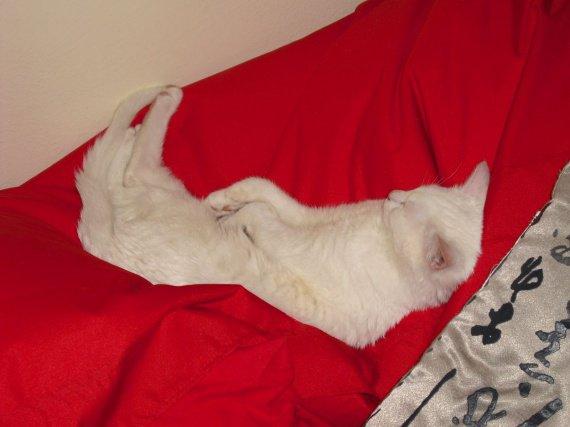 Casper hamac