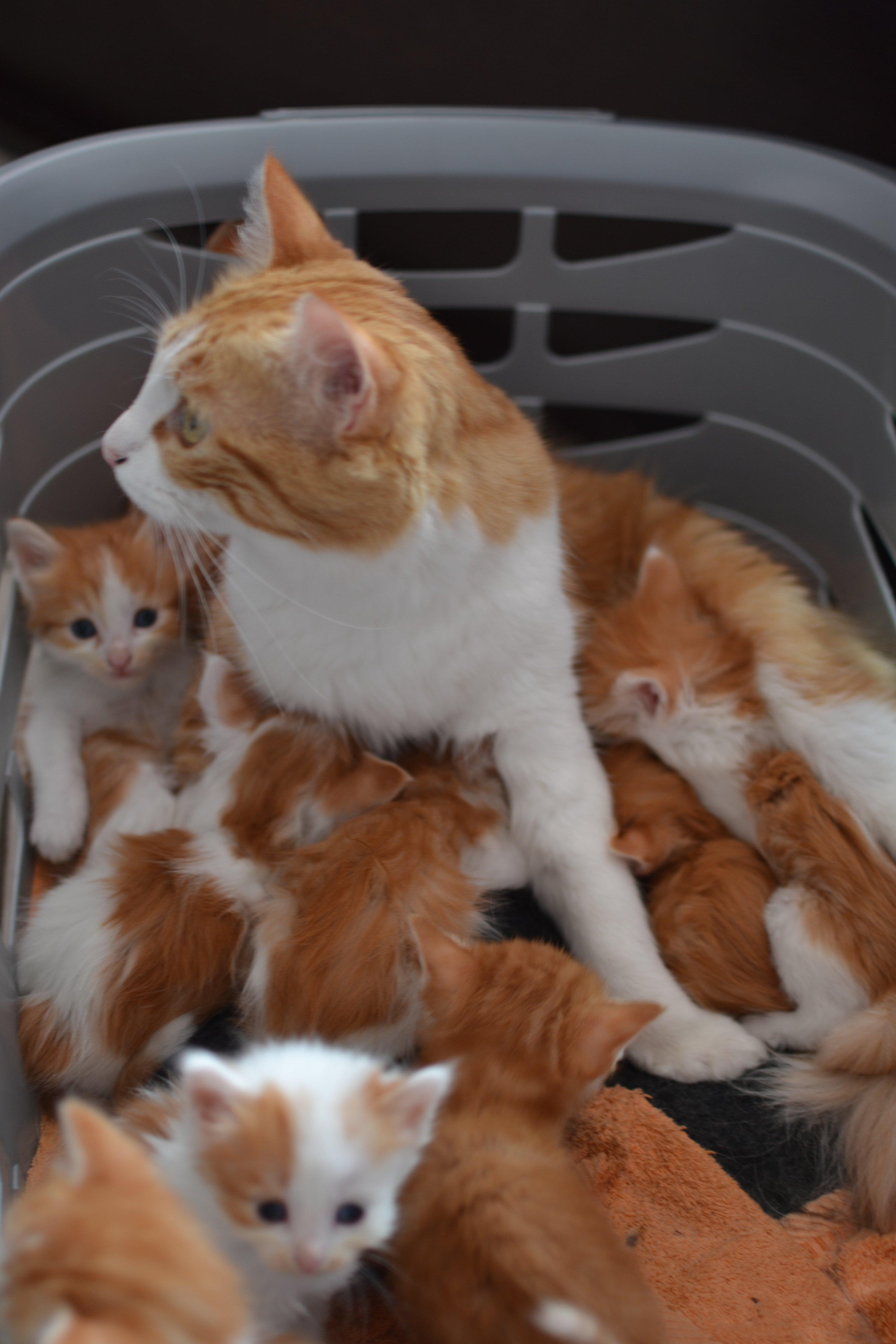 Guimauve et les bébés