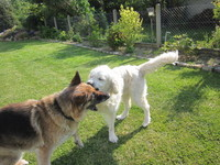 Sania et Daily jouant ensemble