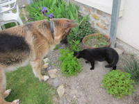 Sania et Hugo