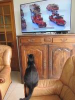 Hugo regardant la télé