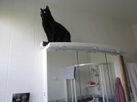 Hugo dans la salle de bains