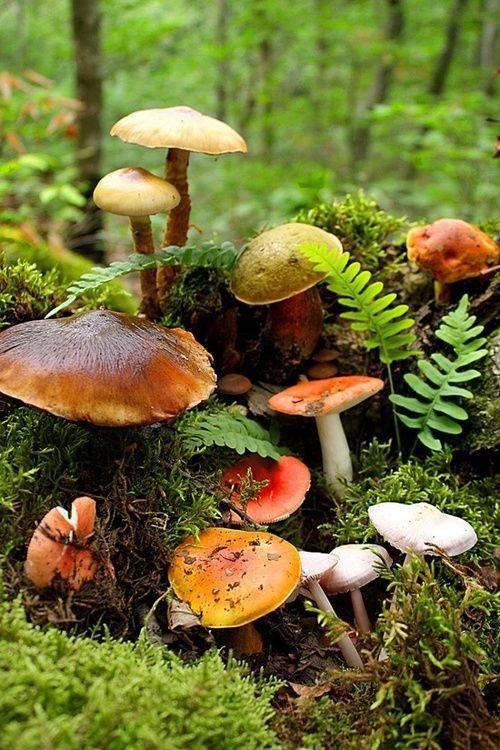 Vive la saison des champignons