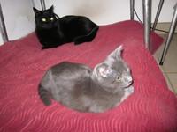 Hugo et Liza sur le coussin de Daily dans l'arrière cuisine