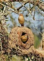 Magnifique nid
