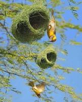 Très beaux nids également