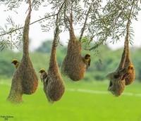 Incroyables nids !