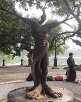 arbre extraordinaire  !!!!...