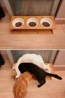 La logique des chats !