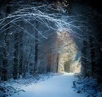 Forêt d'Ecouvres
