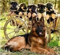 Mes chiens préférés