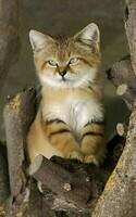chat des sable