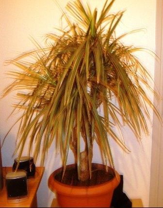 Trouver le nom d 39 une plante jardinage forum vie pratique - Comment trouver le nom d une plante ...